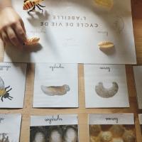 Atelier sur les abeilles !!!